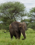 Africa-042.jpg