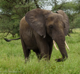Africa-043.jpg