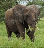 Africa-045.jpg