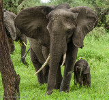 Africa-047.jpg
