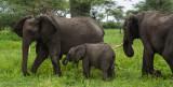 Africa-048.jpg