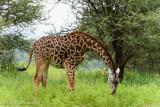 Africa-052.jpg
