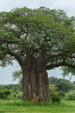 Africa-070.jpg
