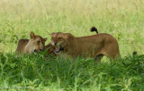 Africa-076.jpg