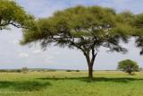 Africa-077.jpg