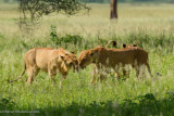 Africa-079.jpg