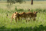 Africa-080.jpg