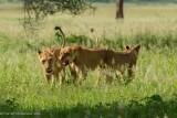 Africa-081.jpg
