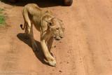 Africa-083.jpg