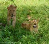 Africa-084.jpg