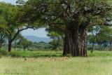 Africa-086.jpg