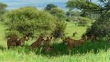 Africa-088.jpg