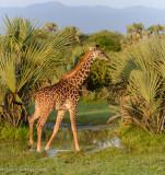 Africa-094.jpg
