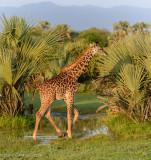 Africa-096.jpg