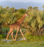 Africa-099.jpg