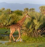 Africa-102.jpg