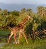 Africa-103.jpg
