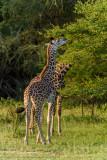 Africa-105.jpg