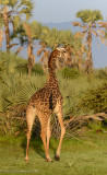 Africa-107.jpg