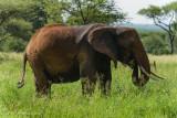 Africa-127.jpg