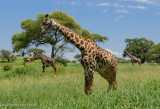 Africa-141.jpg