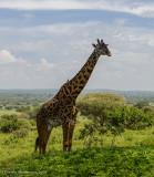 Africa-144.jpg