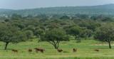 Africa-146.jpg