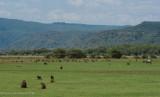Africa-161.jpg