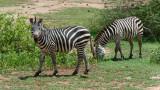 Africa-173.jpg