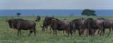 Africa-185.jpg