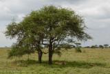 Africa-203.jpg