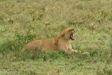 Africa-204.jpg