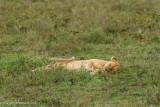 Africa-207.jpg