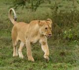 Africa-215.jpg