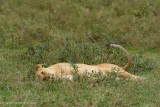 Africa-229.jpg
