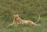 Africa-230.jpg