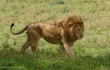 Africa-231.jpg