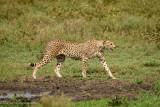 Africa-259.jpg