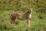 Africa-261.jpg