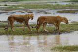 Africa-284.jpg