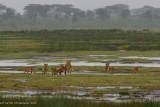 Africa-288.jpg