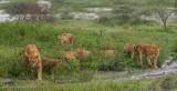 Africa-292.jpg