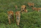 Africa-305.jpg