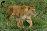 Africa-306.jpg