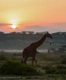 Africa-319.jpg