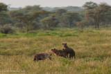 Africa-320.jpg