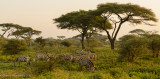 Africa-323.jpg