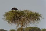 Africa-329.jpg