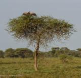 Africa-333.jpg