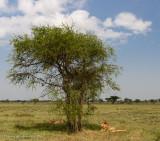 Africa-350.jpg